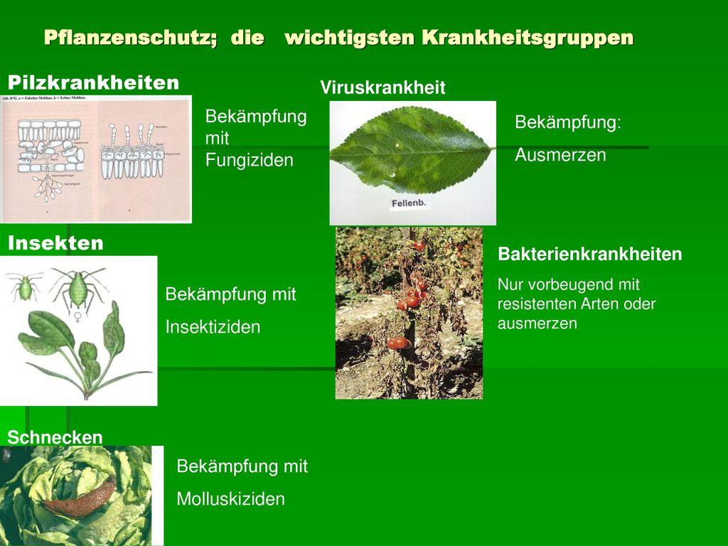 Pflanzenschutz; die wichtigsten Krankheitsgruppen