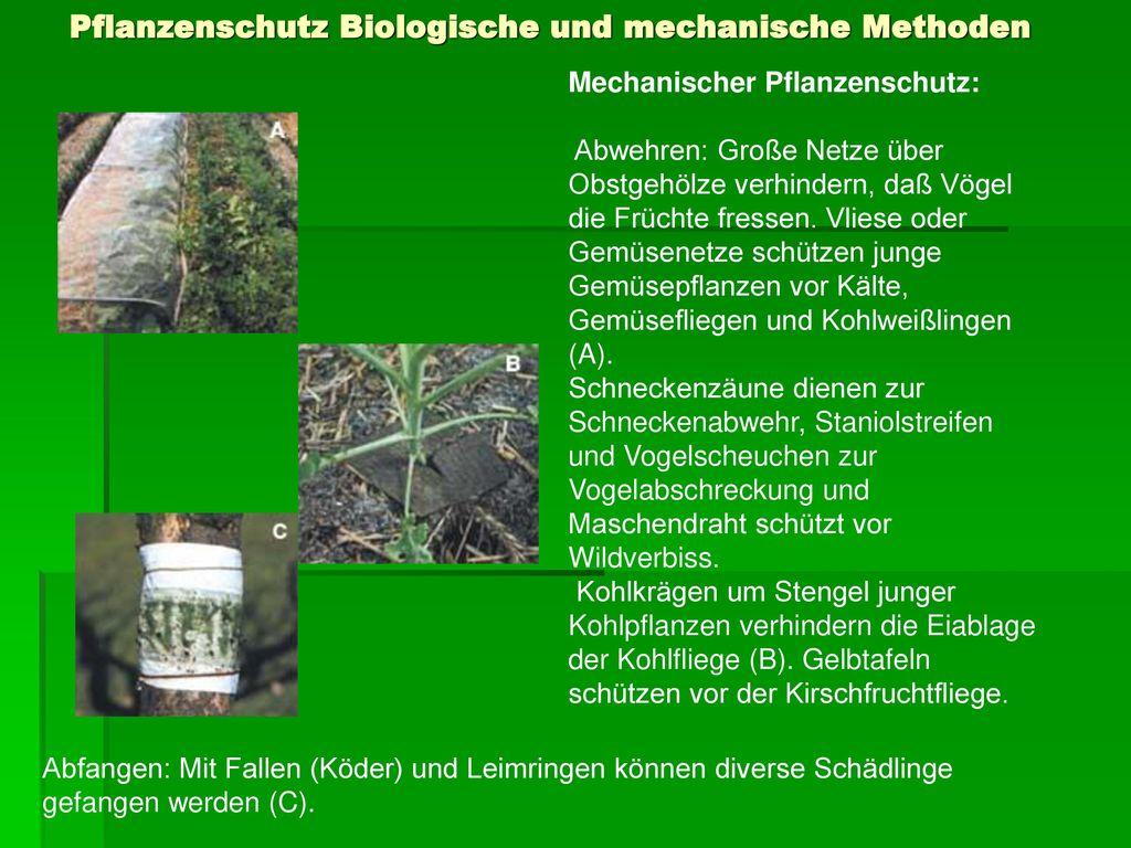 Pflanzenschutz Biologische und mechanische Methoden