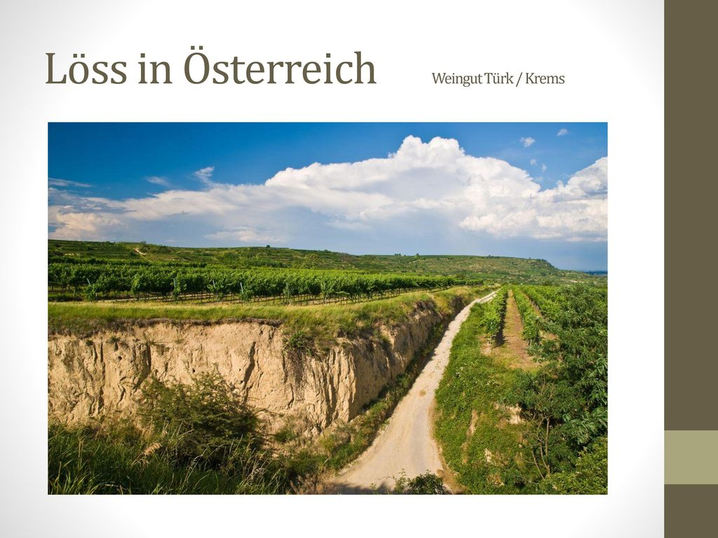 Löss in Österreich Weingut Türk / Krems