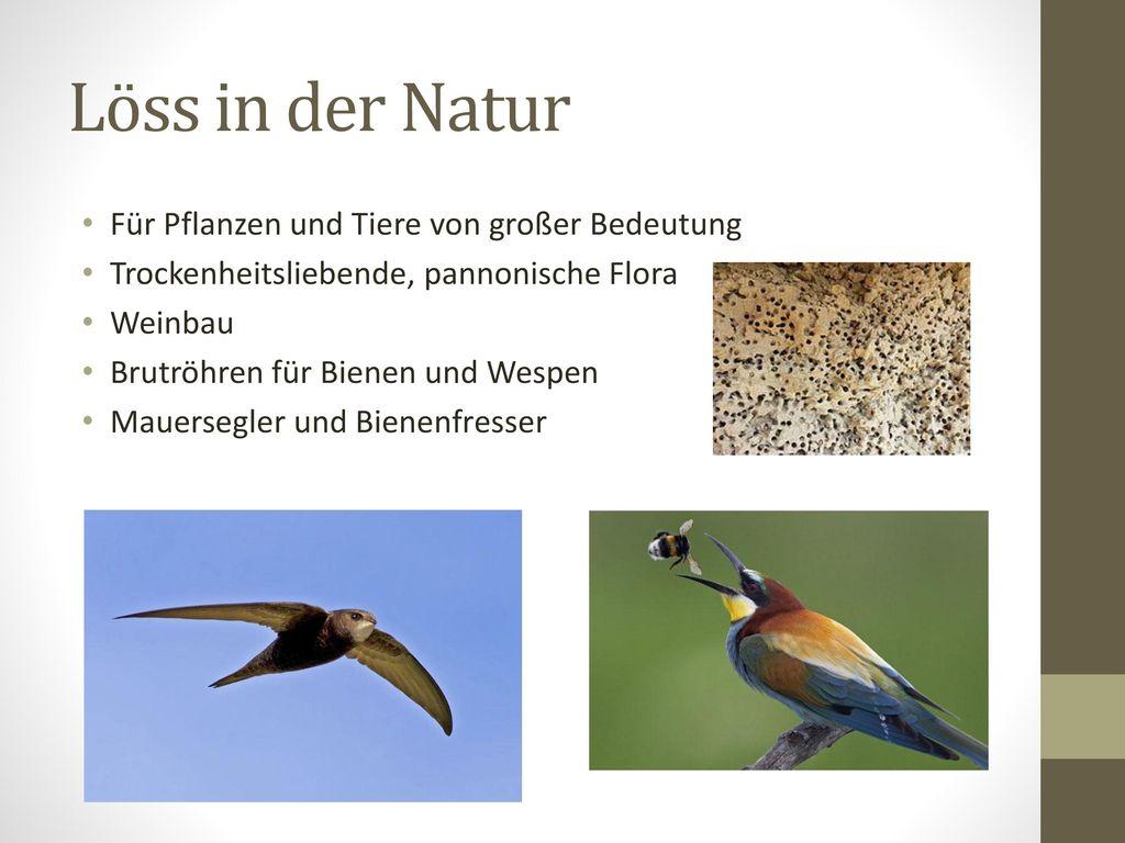 Löss in der Natur Für Pflanzen und Tiere von großer Bedeutung