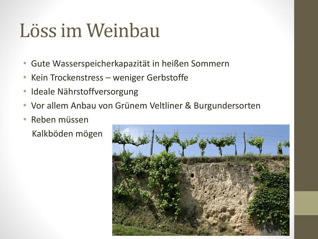 Löss im Weinbau Gute Wasserspeicherkapazität in heißen Sommern