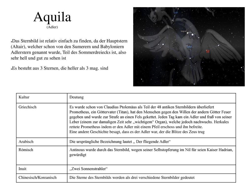 Aquila (Adler)