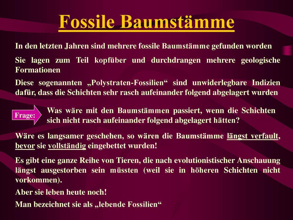 Fossile Baumstämme In den letzten Jahren sind mehrere fossile Baumstämme gefunden worden.