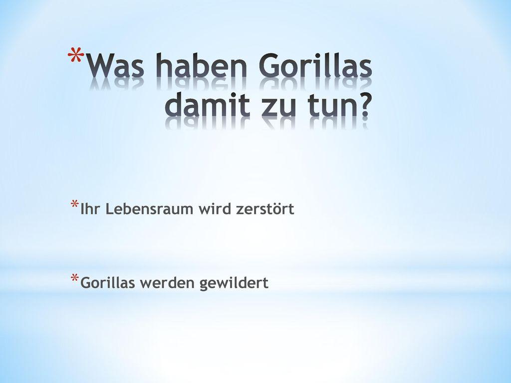 Was haben Gorillas damit zu tun