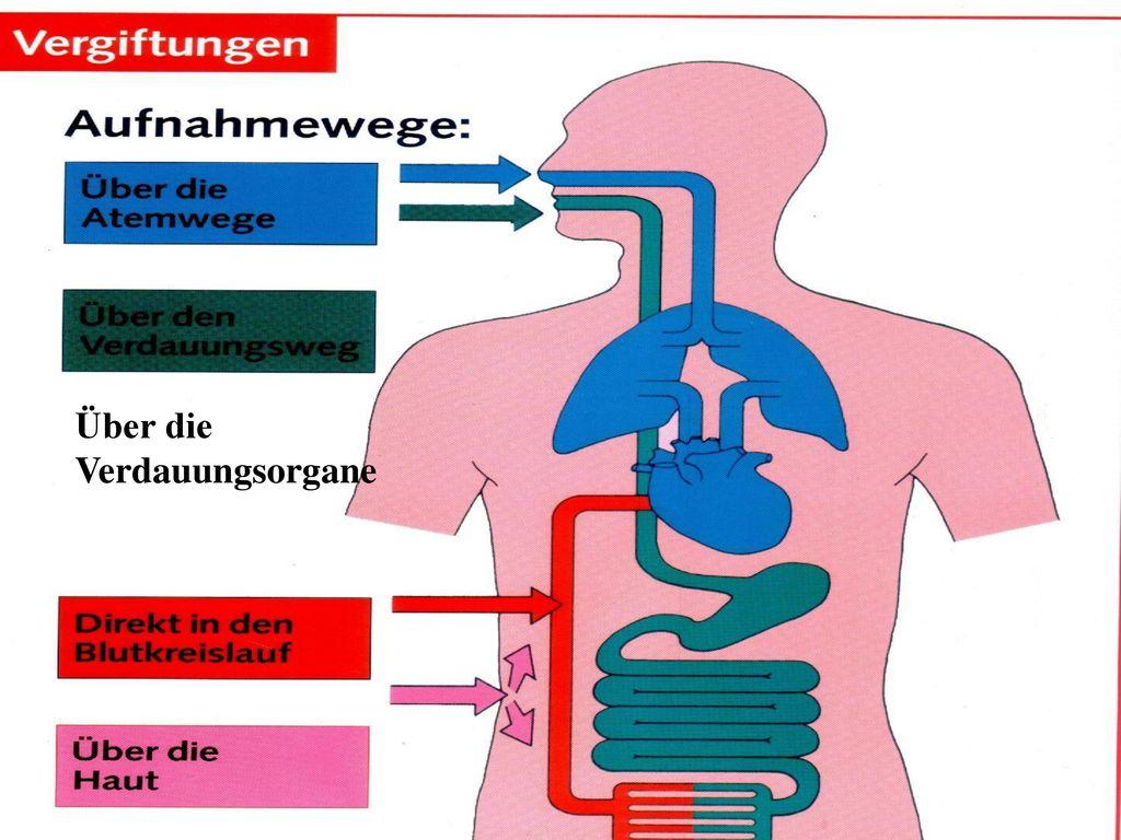 Über die Verdauungsorgane