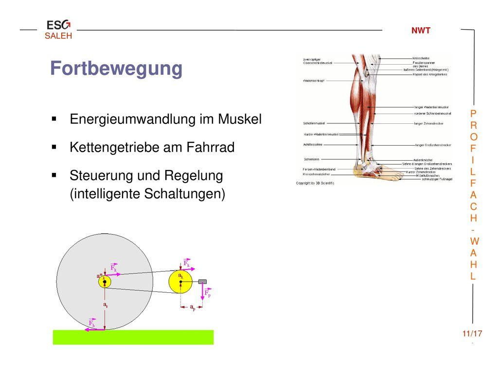 Fortbewegung Energieumwandlung im Muskel Kettengetriebe am Fahrrad