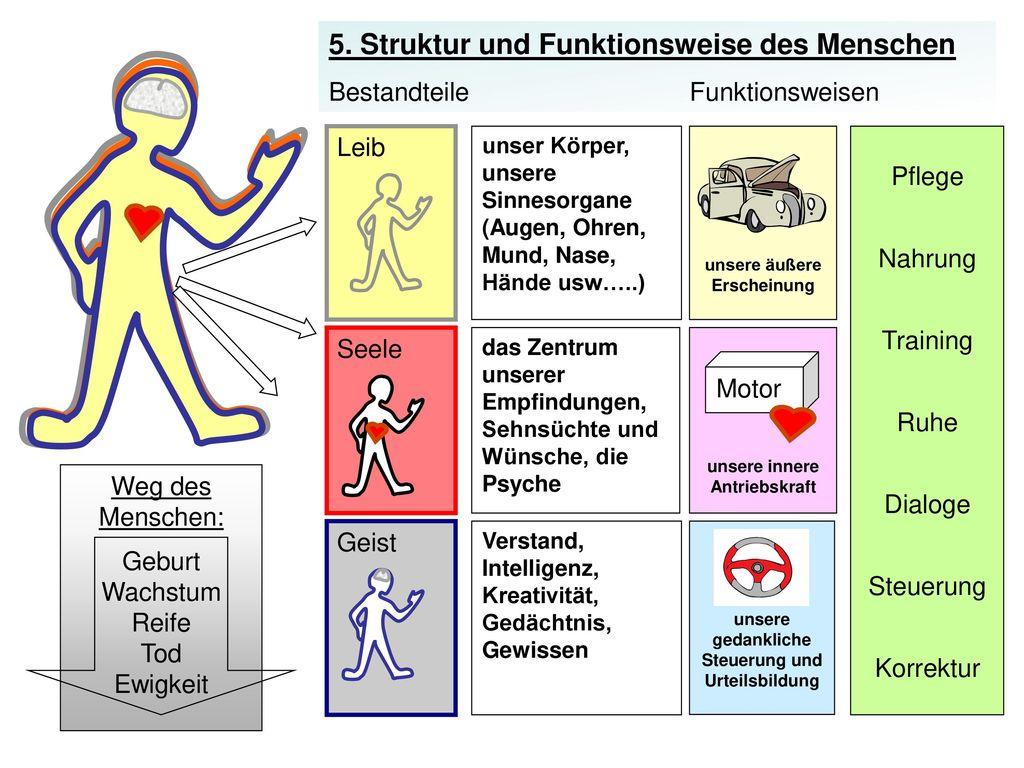 5. Struktur und Funktionsweise des Menschen