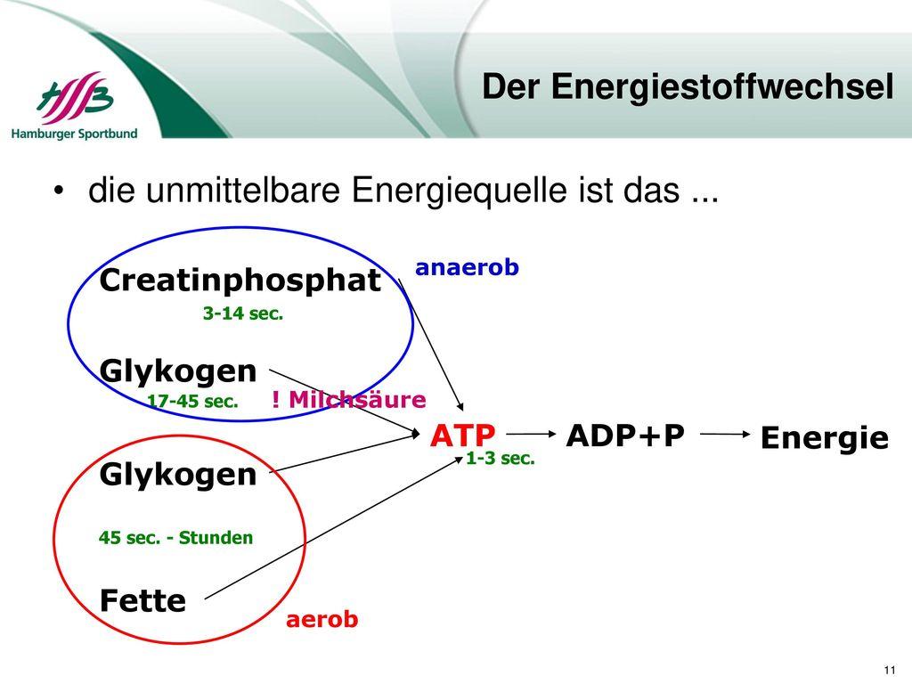 Der Energiestoffwechsel