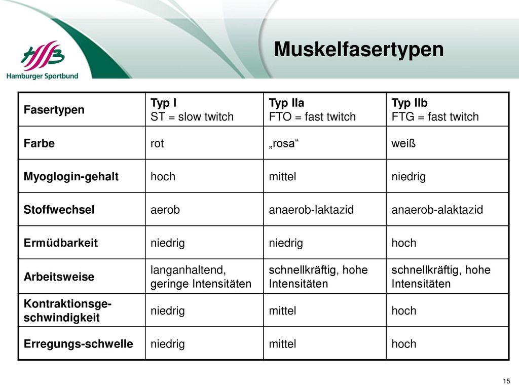 Muskelfasertypen Fasertypen Typ I ST = slow twitch