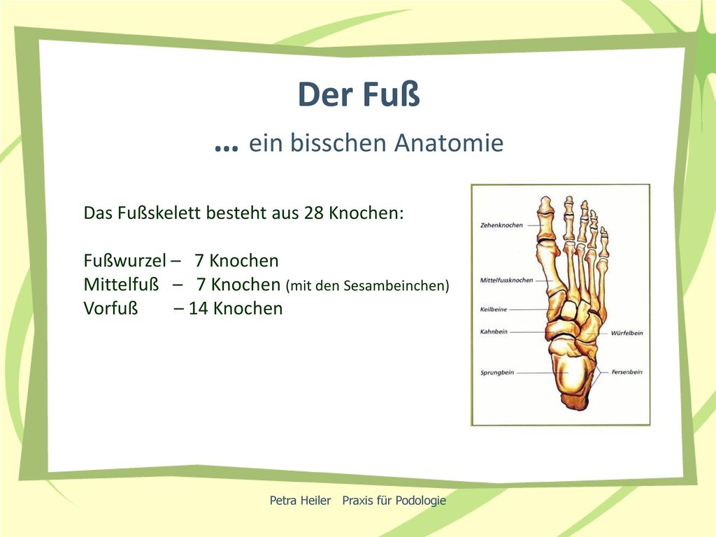 Ungewöhnlich Fuß Und Sprunggelenk Anatomie Bilder - Menschliche ...