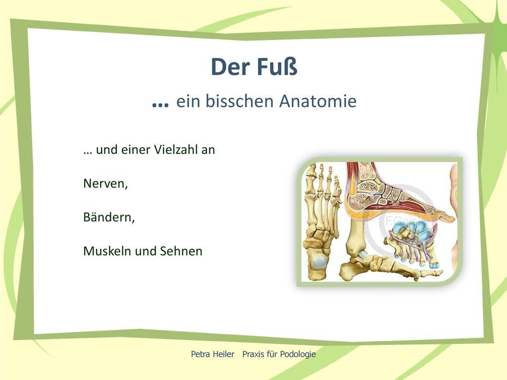 Der Fuß … ein bisschen Anatomie