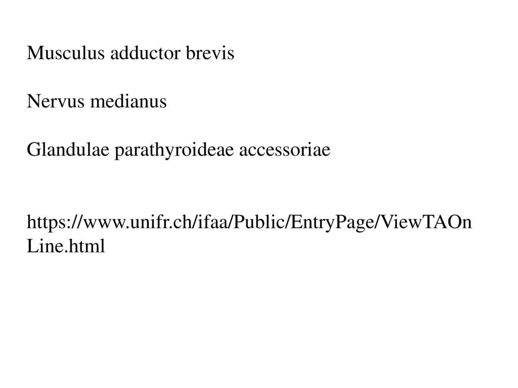 Musculus adductor brevis Nervus medianus