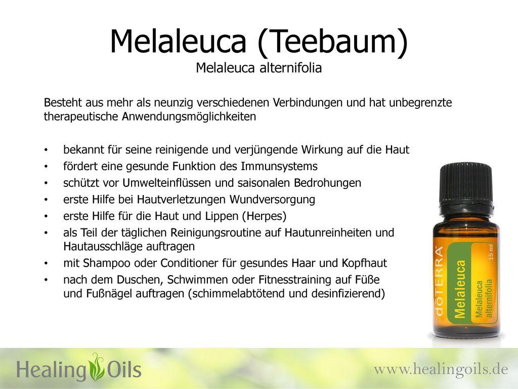 Melaleuca (Teebaum) Melaleuca alternifolia