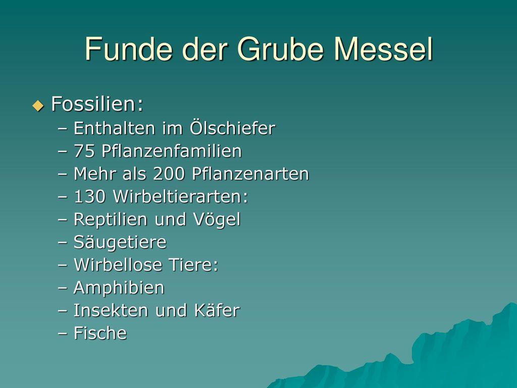 Funde der Grube Messel Fossilien: Enthalten im Ölschiefer