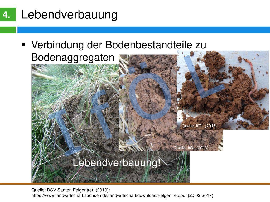 Lebendverbauung 4. Verbindung der Bodenbestandteile zu Bodenaggregaten. I f Ö L.