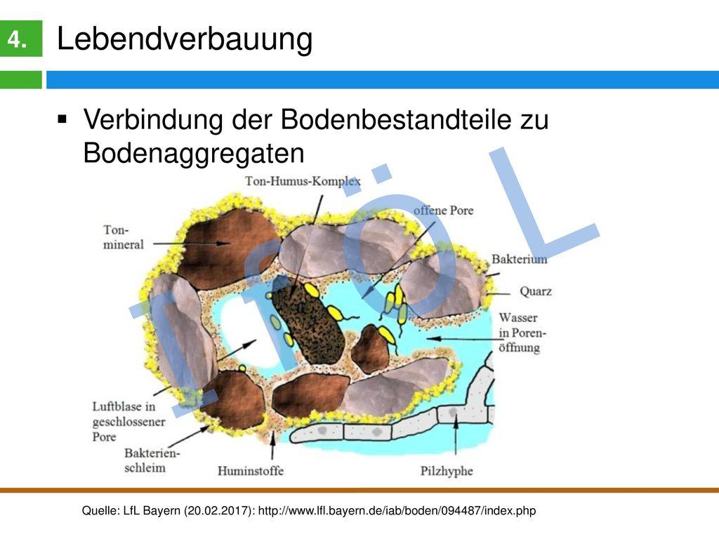 I f Ö L Humusgehalte im Boden Typische Humusgehalte hessischer Böden