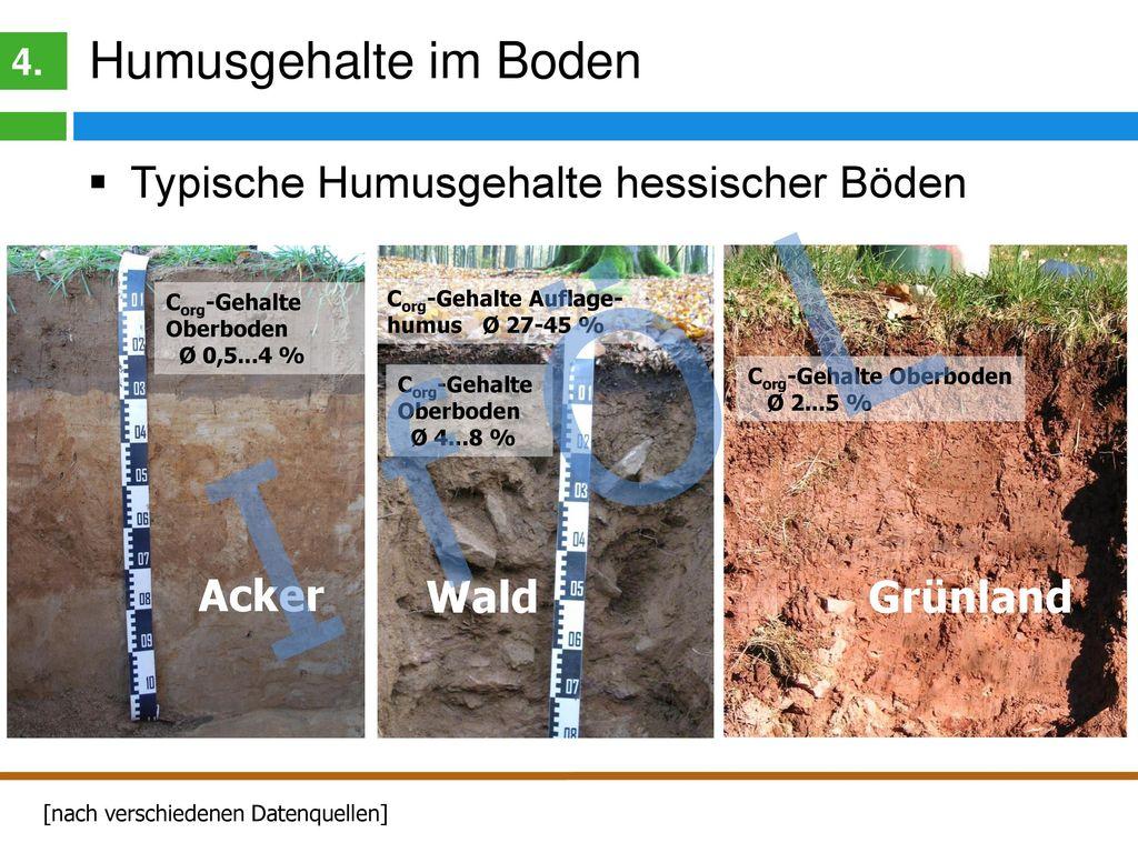 Humusgehalte hessischer Böden
