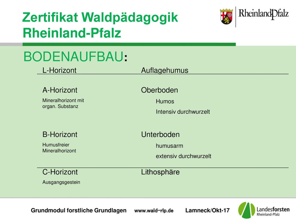 Grundmodul forstliche Grundlagen www.wald-rlp.de Lamneck/Okt-17