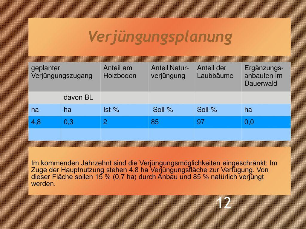 Verjüngungsplanung geplanter Verjüngungszugang Anteil am Holzboden