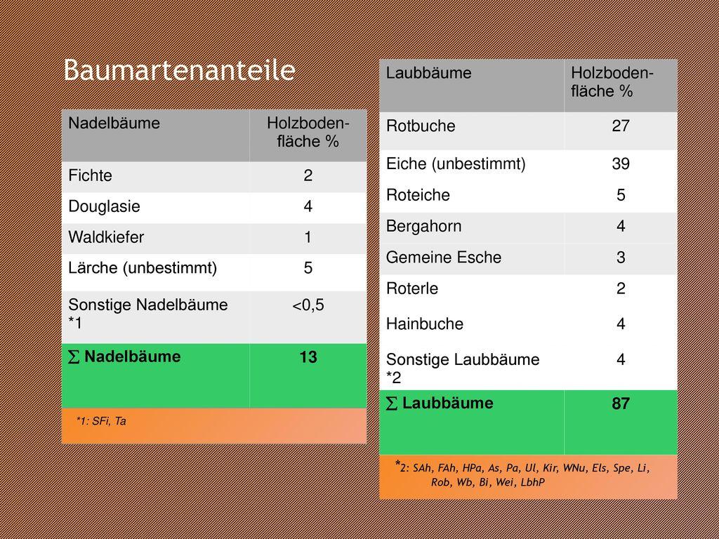 Baumartenanteile Laubbäume Holzboden-fläche % Rotbuche 27