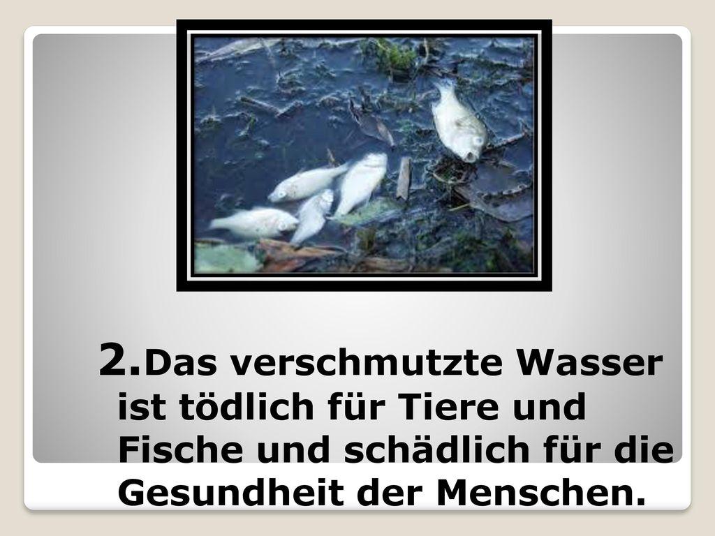 2.Das verschmutzte Wasser ist tödlich für Tiere und Fische und schädlich für die Gesundheit der Menschen.