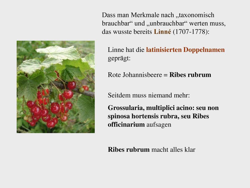 "Dass man Merkmale nach ""taxonomisch brauchbar und ""unbrauchbar werten muss, das wusste bereits Linné (1707-1778):"
