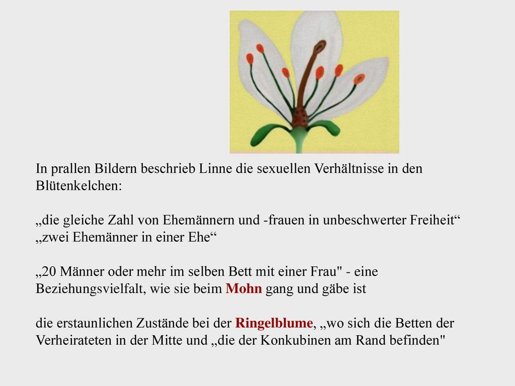 In prallen Bildern beschrieb Linne die sexuellen Verhältnisse in den Blütenkelchen: