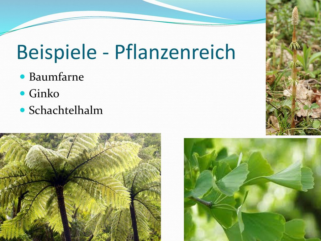 Beispiele - Pflanzenreich