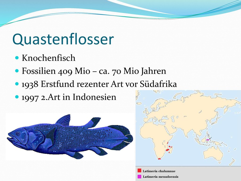 Quastenflosser Knochenfisch Fossilien 409 Mio – ca. 70 Mio Jahren