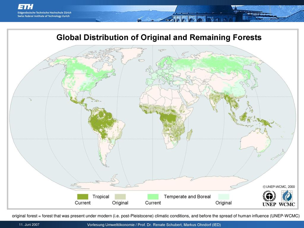 original forest = forest that was present under modern (i. e