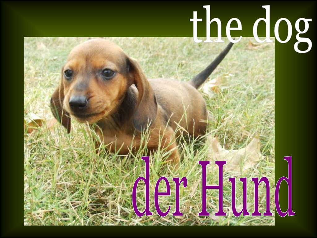 the dog der Hund