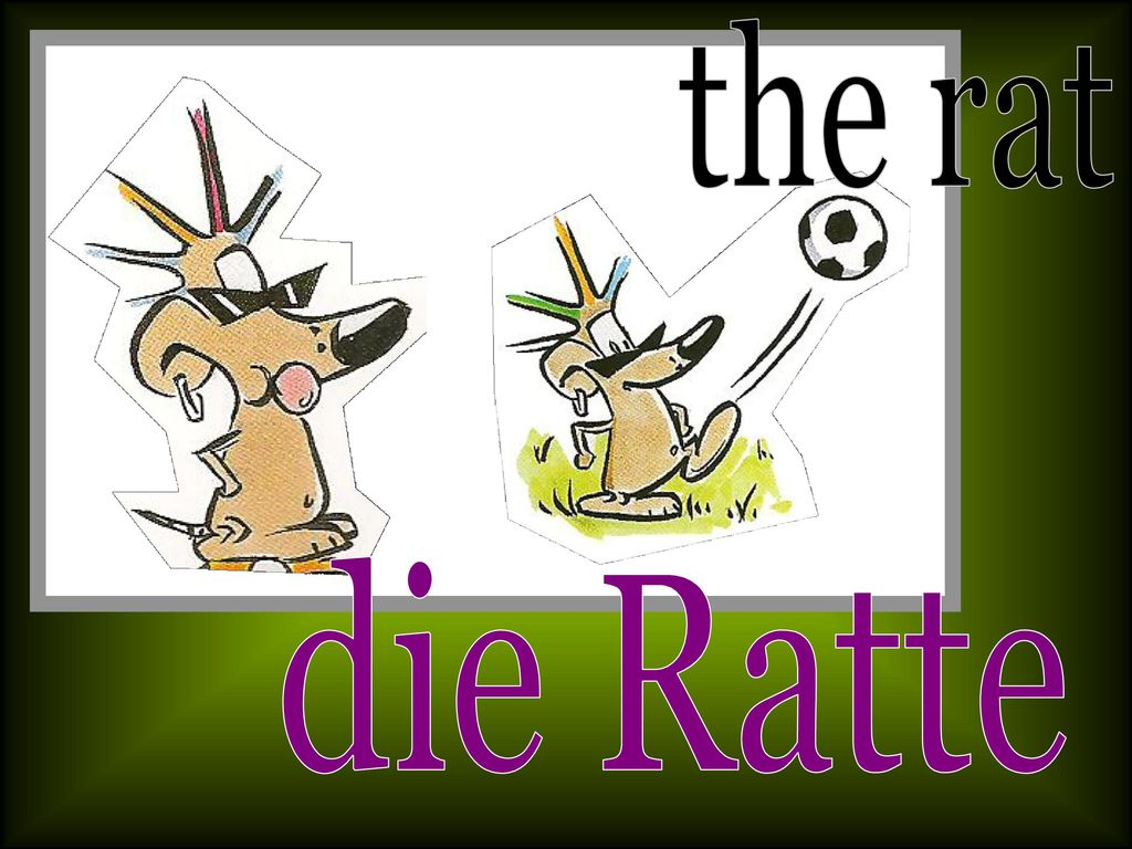 the rat die Ratte