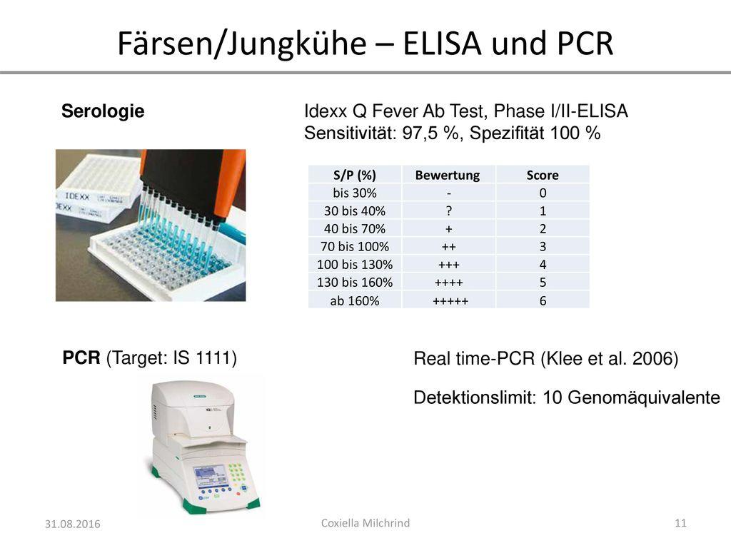 Färsen/Jungkühe – ELISA und PCR