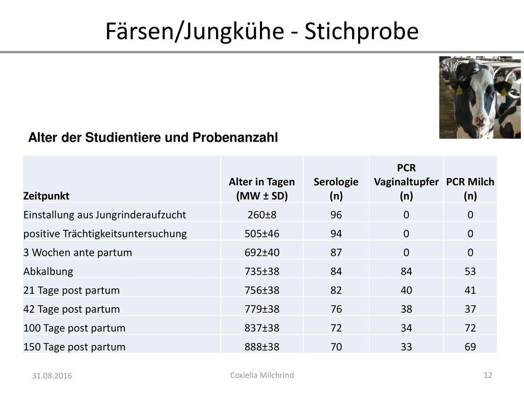 Färsen/Jungkühe - Stichprobe