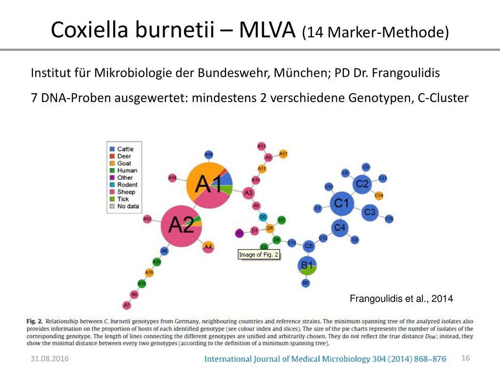 Coxiella burnetii – MLVA (14 Marker-Methode)