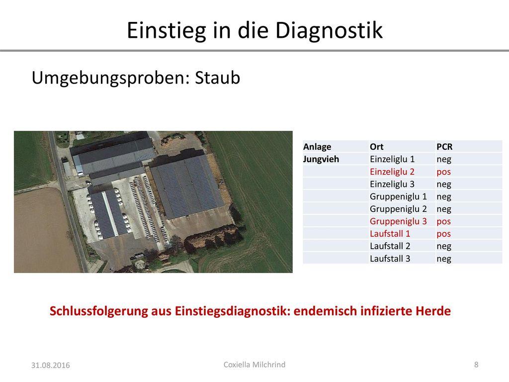 Schlussfolgerung aus Einstiegsdiagnostik: endemisch infizierte Herde