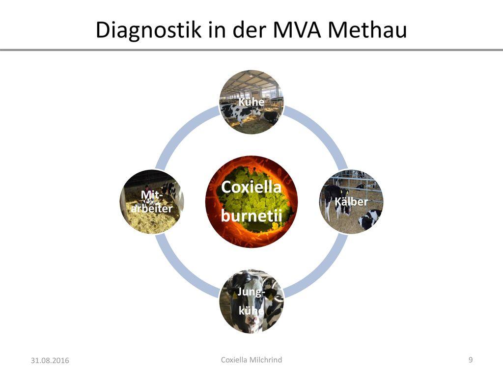Diagnostik in der MVA Methau