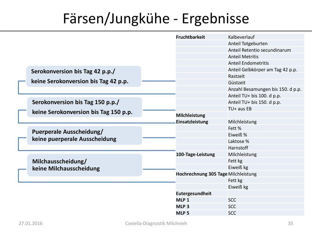 Färsen/Jungkühe - Ergebnisse