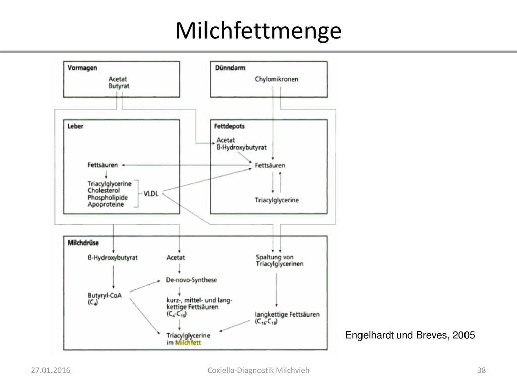 Coxiella-Diagnostik Milchvieh