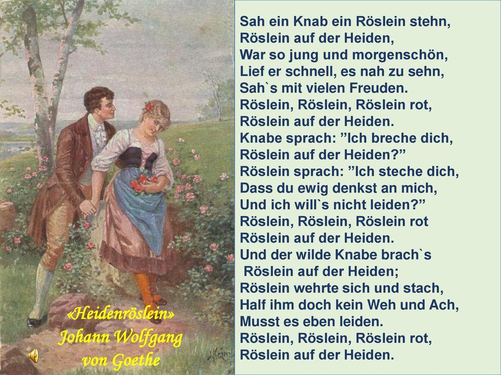 «Heidenröslein» Johann Wolfgang von Goethe