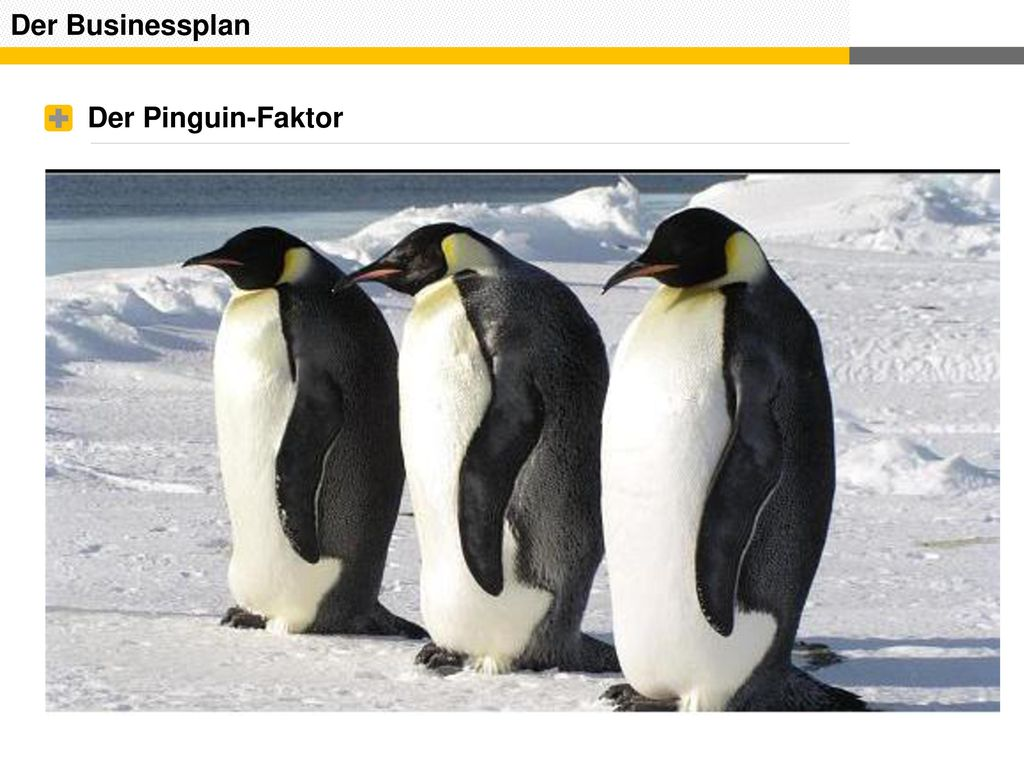 Der Businessplan Der Pinguin-Faktor