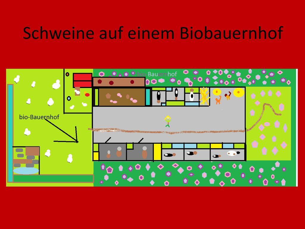 Schweine auf einem Biobauernhof