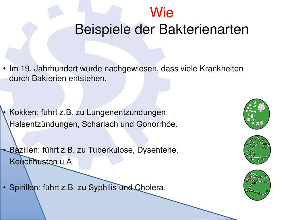Wie Beispiele der Bakterienarten