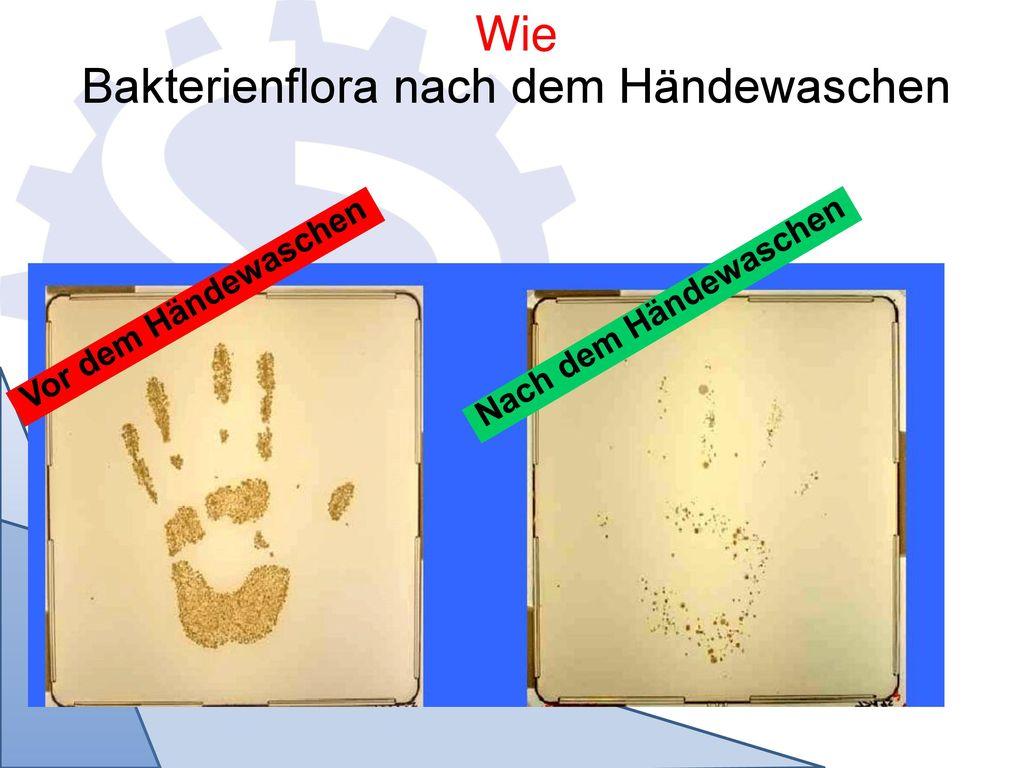 Bakterienflora nach dem Händewaschen