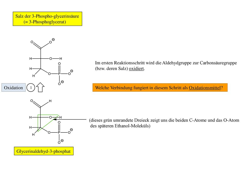 Salz der 3-Phospho-glycerinsäure