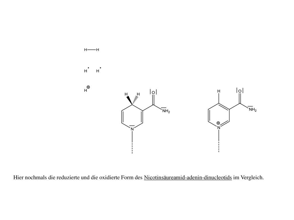 Hier nochmals die reduzierte und die oxidierte Form des Nicotinsäureamid-adenin-dinucleotids im Vergleich.