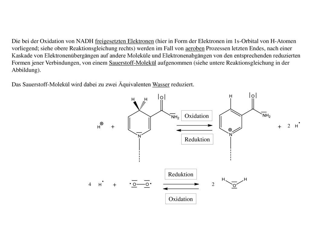 Die bei der Oxidation von NADH freigesetzten Elektronen (hier in Form der Elektronen im 1s-Orbital von H-Atomen vorliegend; siehe obere Reaktionsgleichung rechts) werden im Fall von aeroben Prozessen letzten Endes, nach einer Kaskade von Elektronenübergängen auf andere Moleküle und Elektronenabgängen von den entsprechenden reduzierten Formen jener Verbindungen, von einem Sauerstoff-Molekül aufgenommen (siehe untere Reaktionsgleichung in der Abbildung).