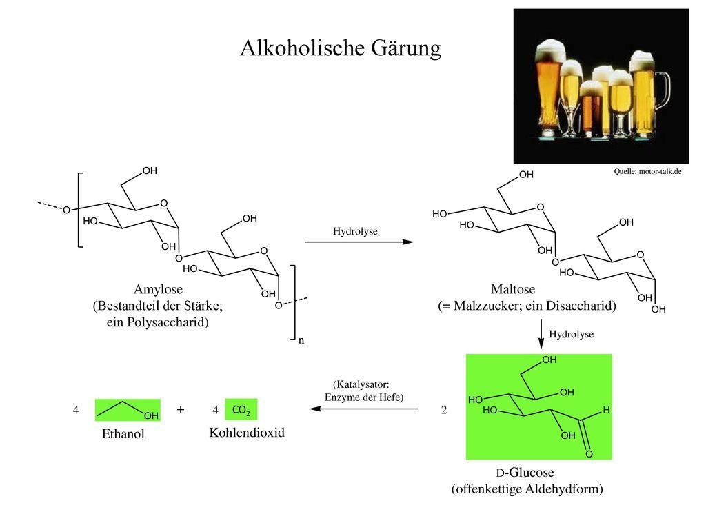 Alkoholische Gärung Amylose (Bestandteil der Stärke;