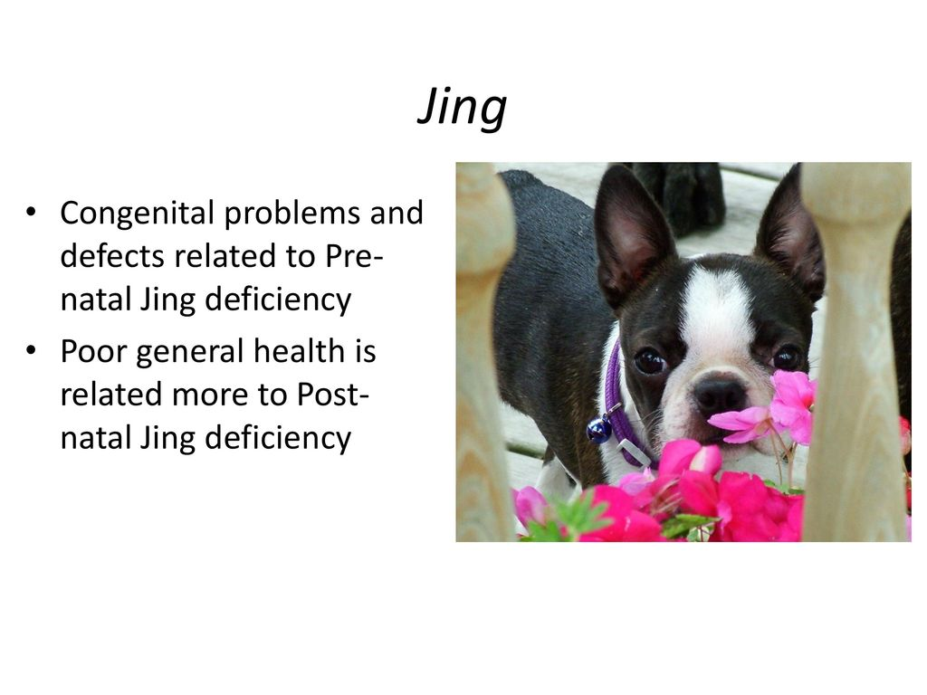 Jing Congenital problems and defects related to Pre-natal Jing deficiency.