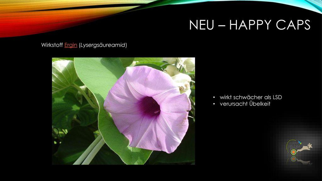 NEU – Happy caps Wirkstoff Ergin (Lysergsäureamid)